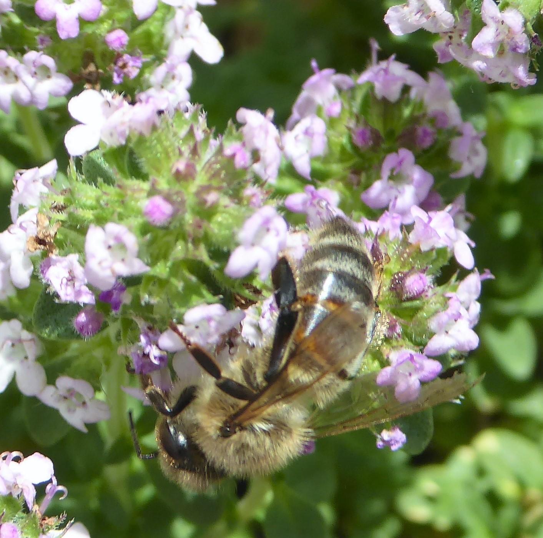 Aidons nos abeilles